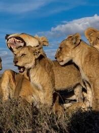 BBC:动物群追逐者
