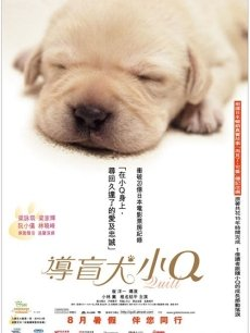 导盲犬小Q
