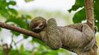 世界上最懒的十大动物