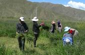 西藏调研行:守护雪域绿色净土