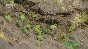 《人与自然》 20201025 安第斯山脉的自然奇境