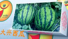 """平谷大桃 大兴西瓜等当选""""北京农业好品牌"""""""