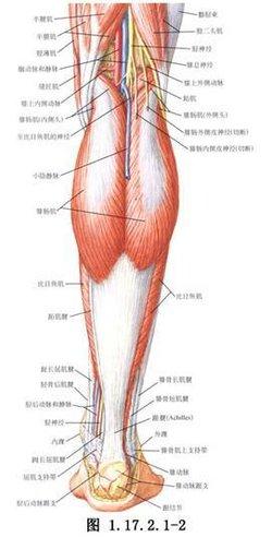 简述经手背静脉网注入药经过哪些途径到达肝