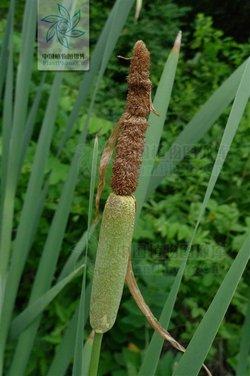 单子叶植物根的横切面结构简图