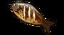 烤鲤鱼.png