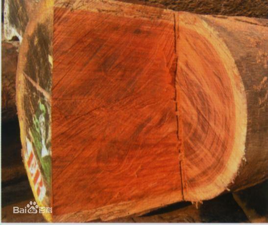 古夷苏木是什么木