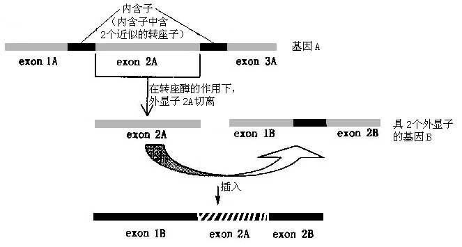 将一个合成的rs(精氨酸-丝氨酸)结构域融合到能够与