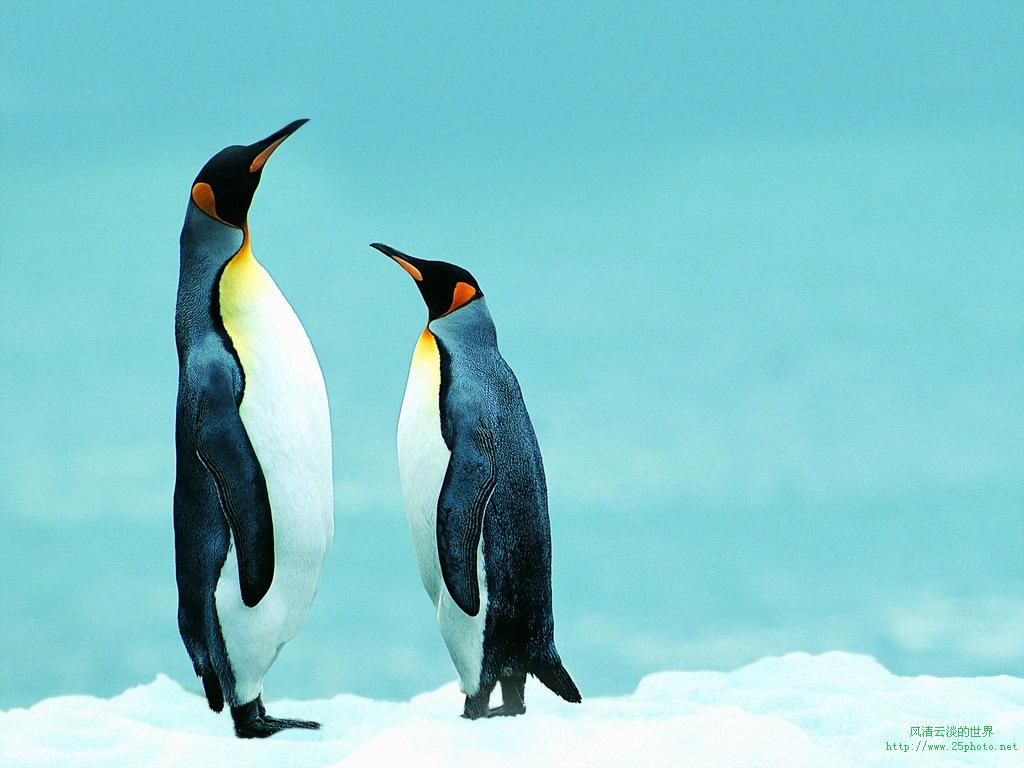 仙企鹅海报简笔画步骤图片