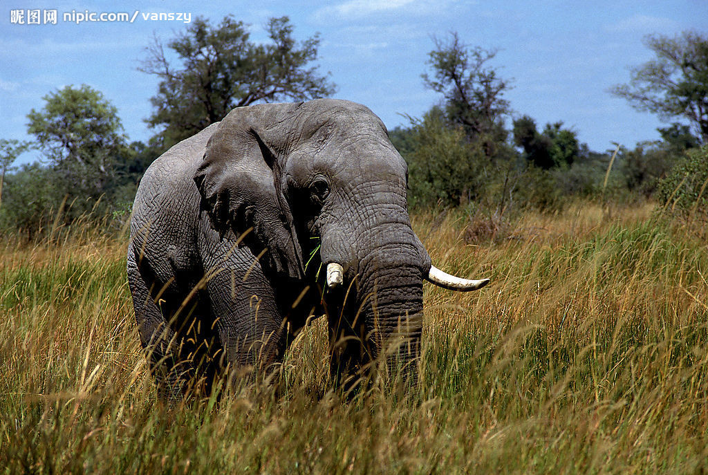 柬埔寨的木雕大象