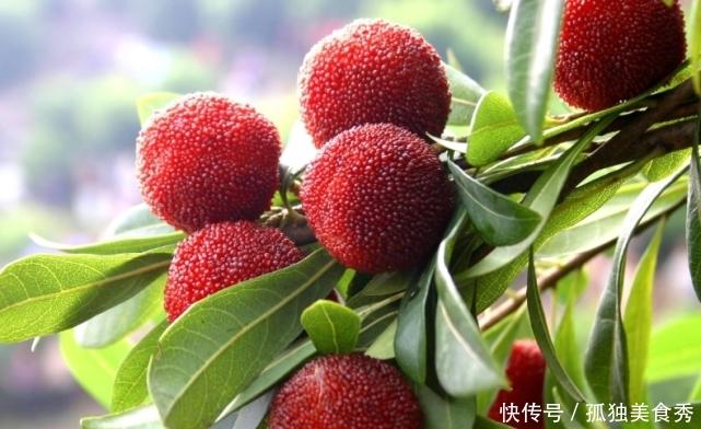 这些保质期最短的水果,只适合在夏天吃,第三种只能保存几小时