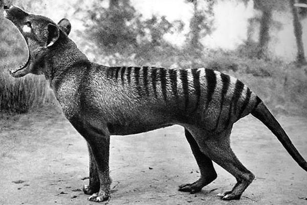 世界上八大神秘动物,有的已经灭绝,有的至今仍为破解