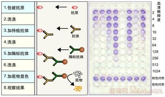 酶联免疫吸附测定