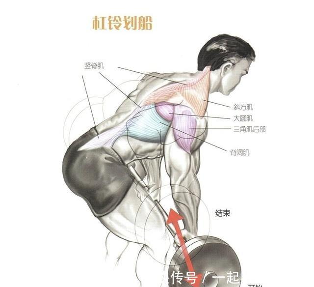 v肌肉肌肉图解方式教程群锻炼背部视频爆发力图片