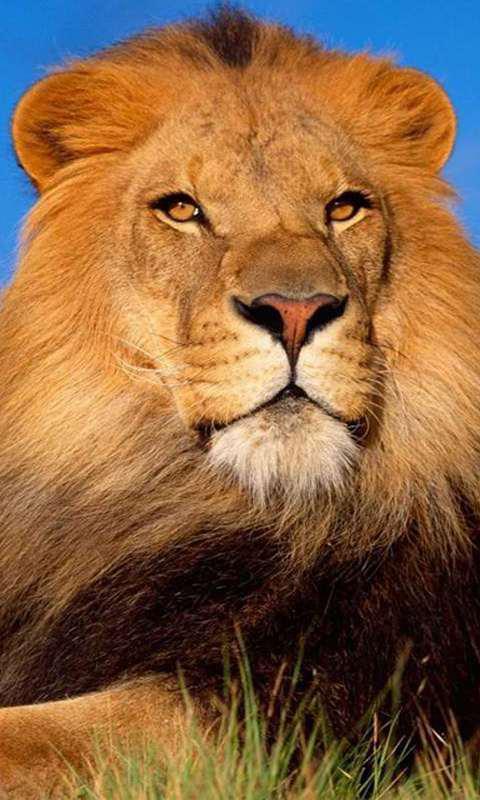 超过30的最好的动物动态壁纸壁纸和图片的野生动物,可爱的,可爱的