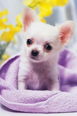 可爱的小狗壁纸_360手机助手