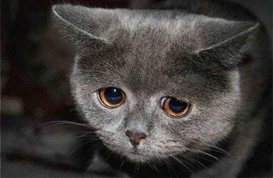 蓝瘦香菇!动物实力演绎不开心