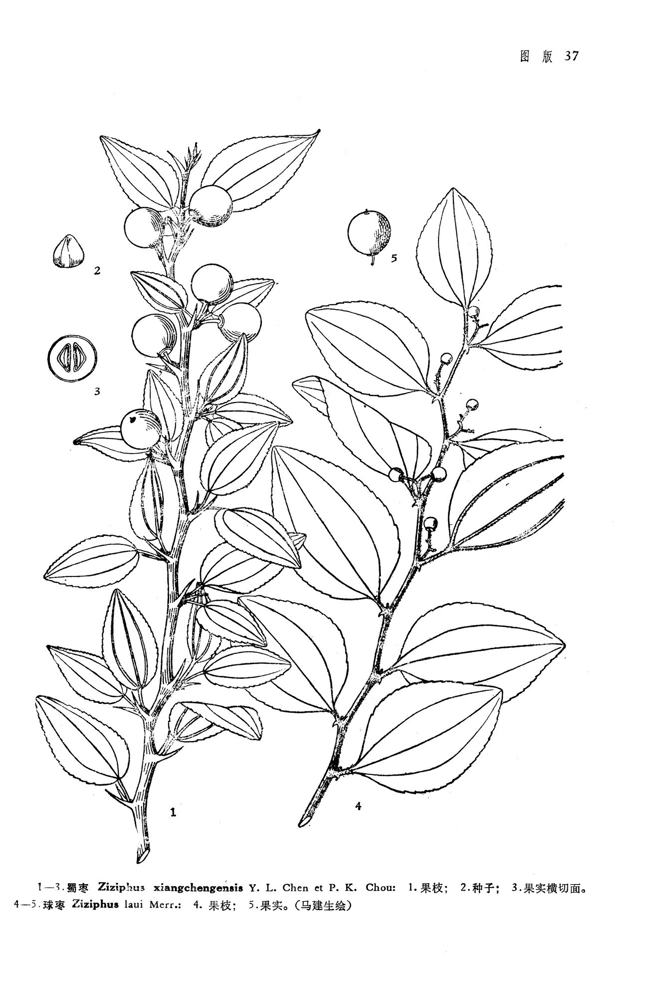 简笔画 手绘 线稿 1331