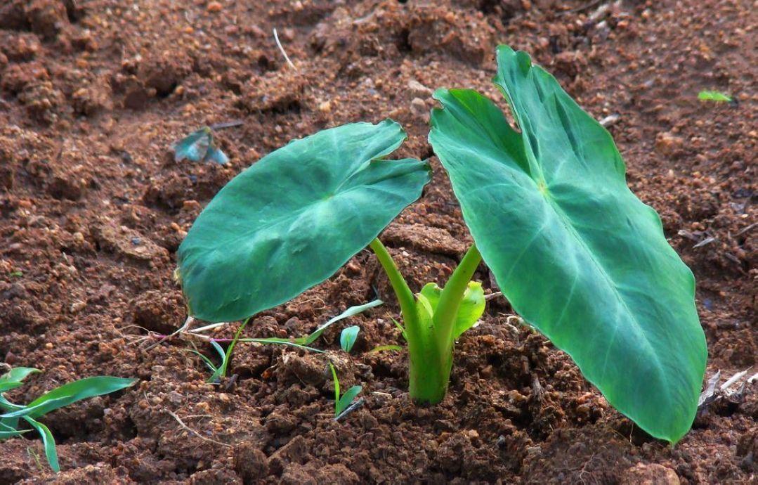 背景 壁纸 绿色 绿叶 树叶 植物 桌面 1079_690