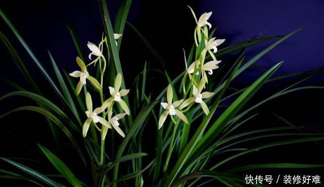 <b>要想兰花长得好,浇水就得掌握这几招,不烂根长得壮,开花还很美</b>