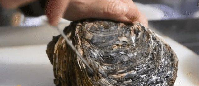 日本人都不喜欢吃生蚝,为什么中国人疯抢说了你们别不相信