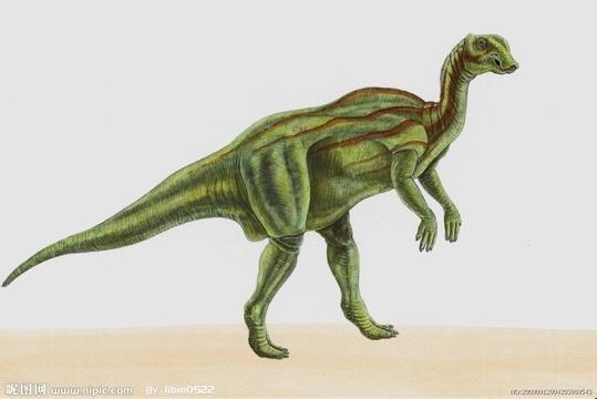 鳄鱼都属于爬行动物的主龙类演化支