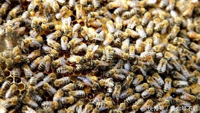 了解中蜂主要的生活习性,在管理上应注意以下几个方面的问题