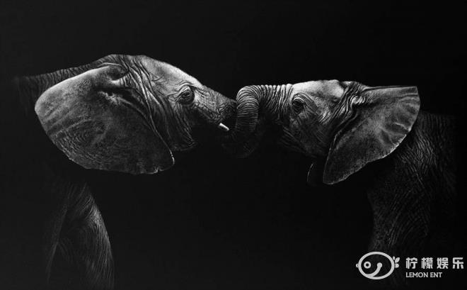 动物黑白照(2)