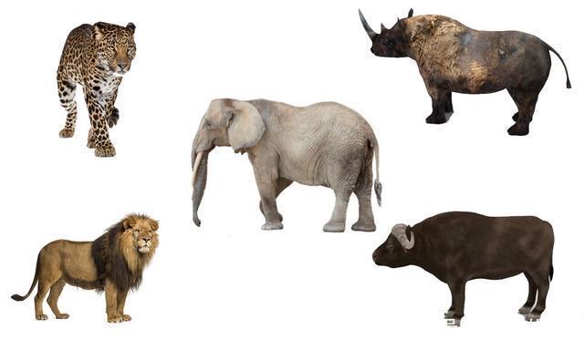 非洲野生动物中的五霸,实力应该如何排序?