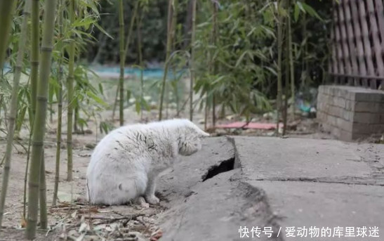 大白猫在洞口等媳妇,结果一只接着一只,出来的都不是自己的媳妇