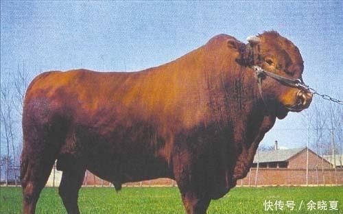 """有缘千里来相会,8月将一炮响三红,""""73年""""牛牛人要关照一个人,是贵人"""