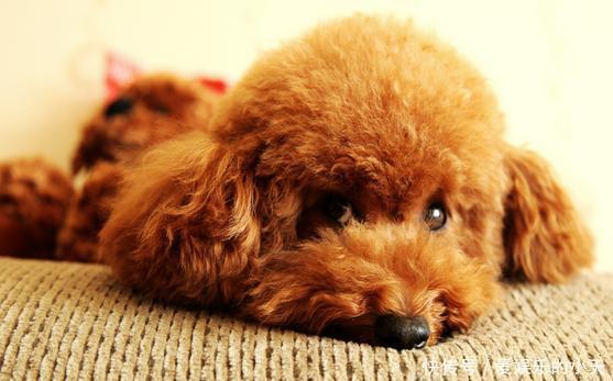 给狗狗喂养零食的注意事项