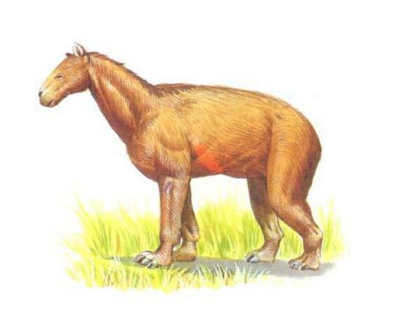"""5种在远古已灭绝的史前动物,第3种被称为""""披着狼皮的羊"""""""
