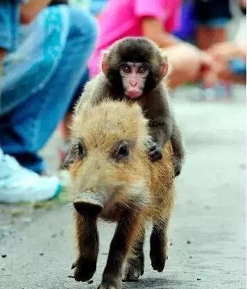 猴子是怎么欺负其它星座的,看了你就知道 -  - 真光 的博客