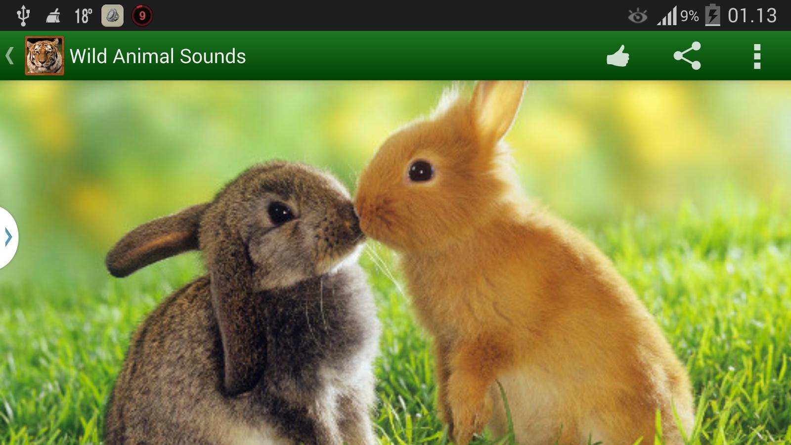 野生动物的叫声下载,教育学习-kk169