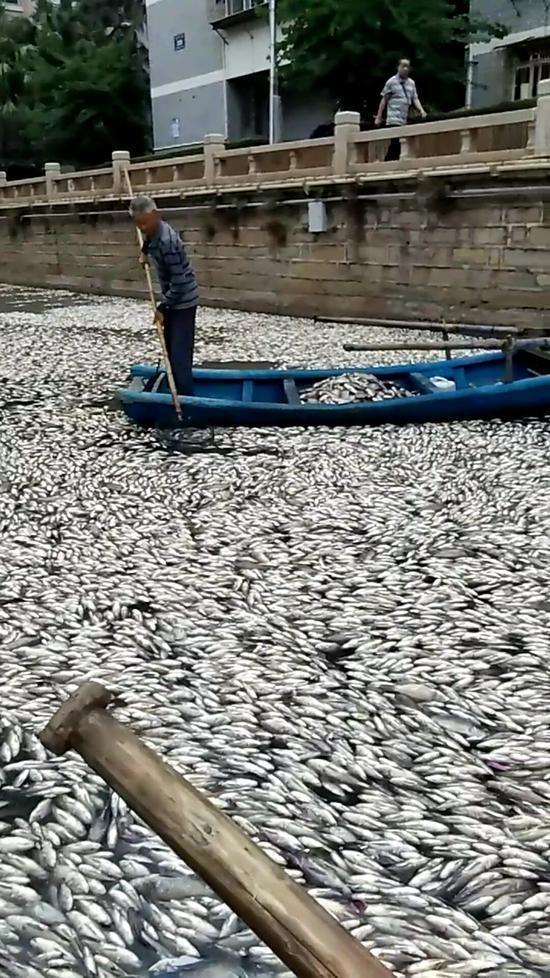【转】北京时间    厦门松柏湖现大量死鱼 连续打捞三天每天捞16船 - 妙康居士 - 妙康居士~晴樵雪读的博客