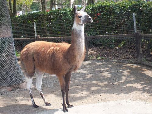 缅甸南邓字花36动物图片分解