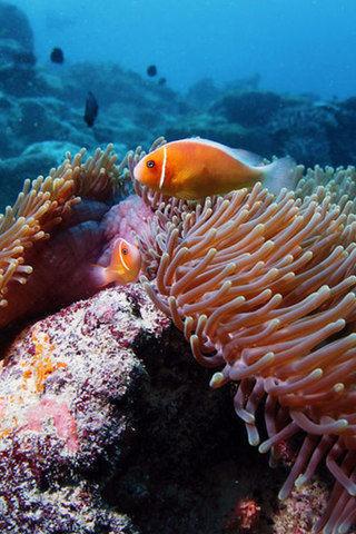 高清海底世界壁纸_360手机助手