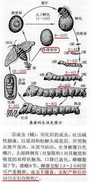 蚕的生命周期一 共有 多少天