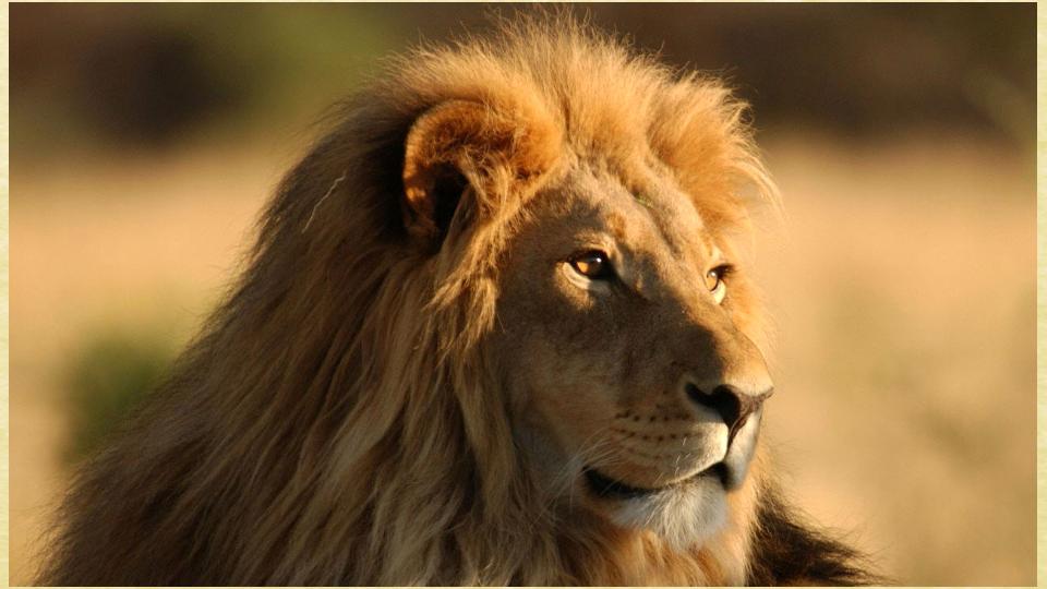 该应用程序提供了一个大的动物图片的原始质量.