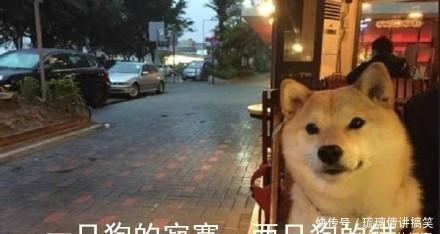 七夕做做,送套单身给表情如何上的信删除图片表情包微收藏狗们在即v单身!秀恩图片