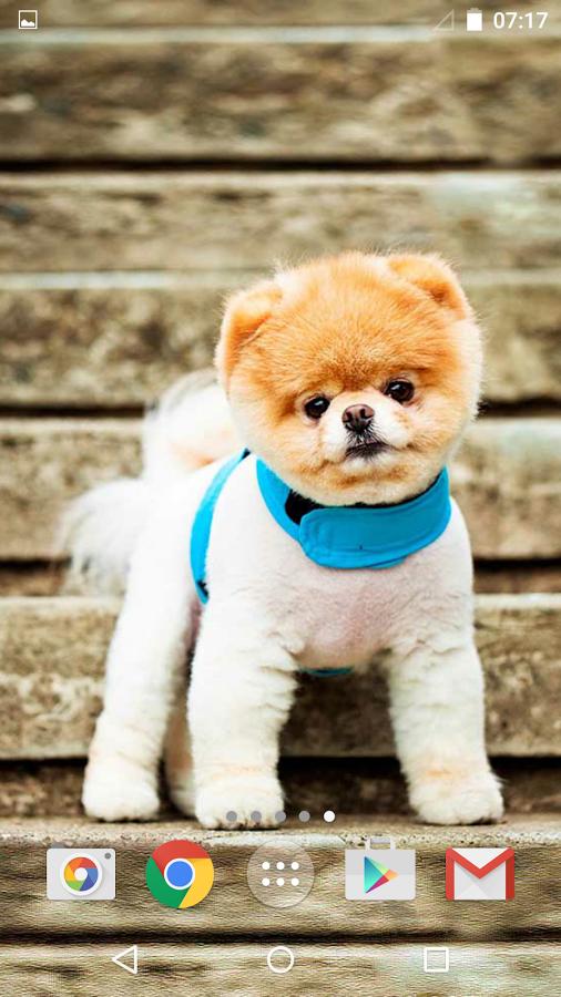 可爱的狗甜hd壁纸动物和图片在那里为所有谁认为狗是
