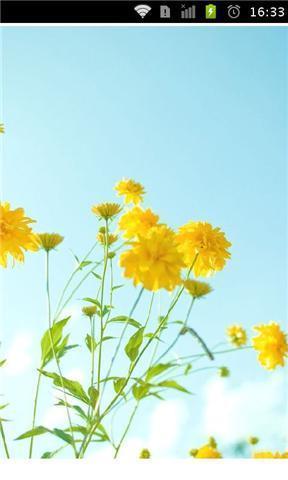文艺花卉手机壁纸