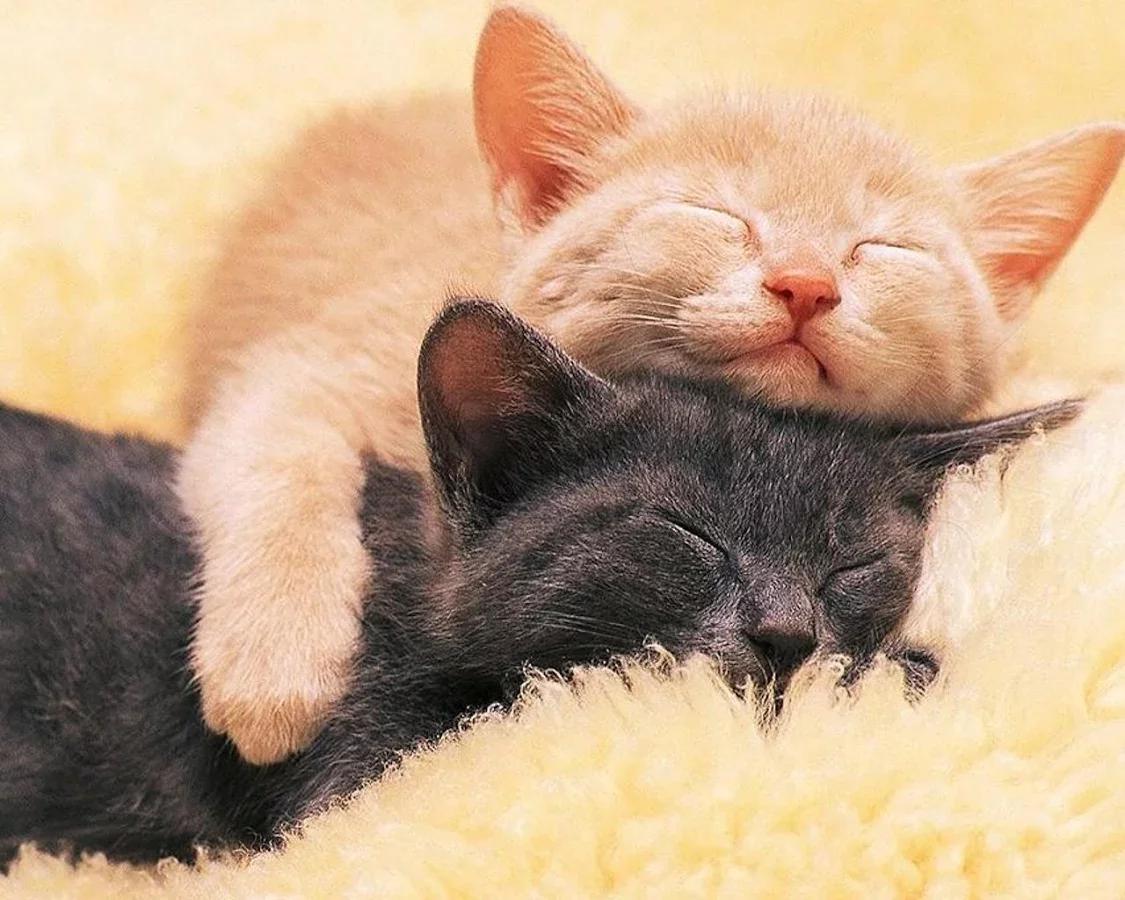 >小猫拼图                       小猫拼图益智游戏为大家谁爱可爱
