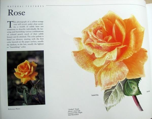 玫瑰花的画法_好搜问答
