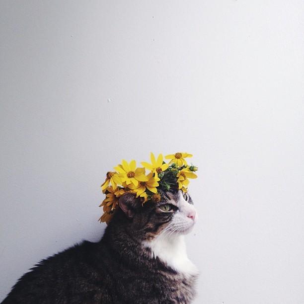 花与喵。作者:ArieleAlasko