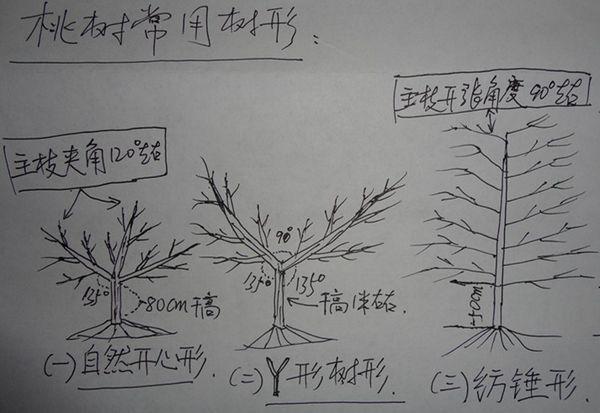 桃树手绘平面图