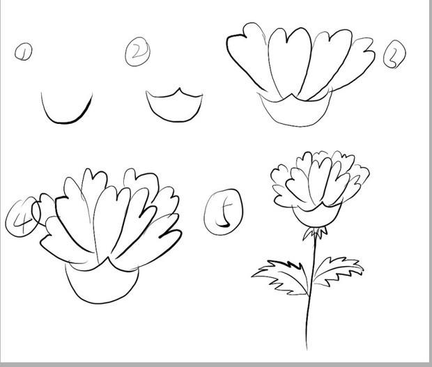 简单画个简笔的,其实照着康乃馨的图片画挺简单的.