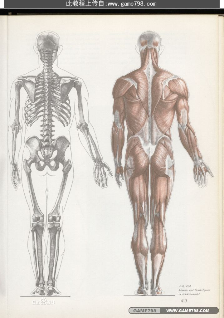 """人体 维萨留斯/比利时医生维萨留斯发表《人体结构》一书,对盖伦的""""三位一体..."""