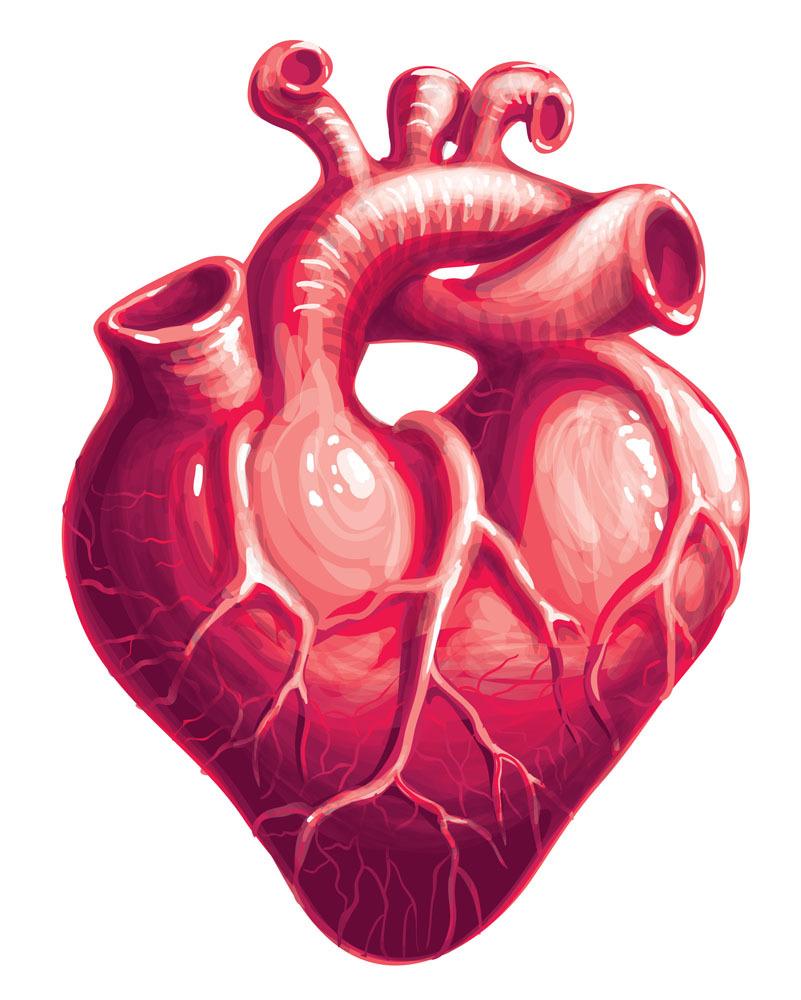 手绘心脏简图的画法