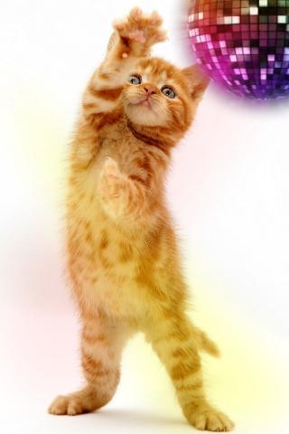 您的手机屏幕上跳舞的猫活壁纸